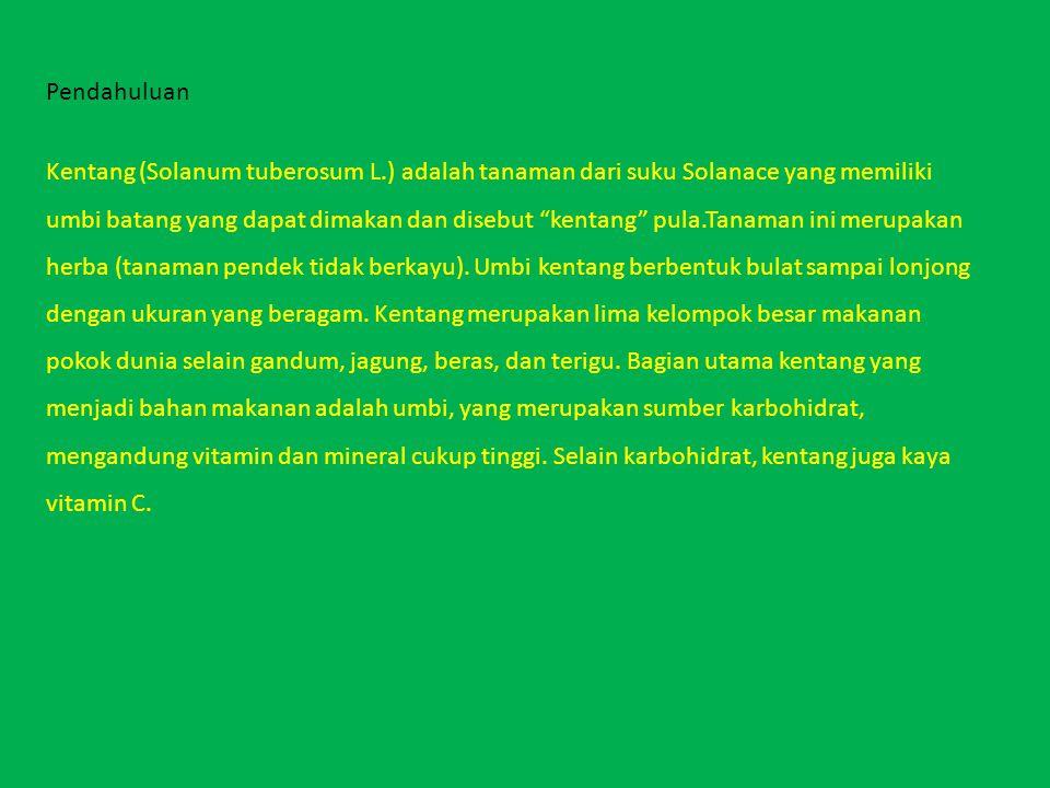 Penyakit fusarium Penyebab: jamur Fusarium sp.