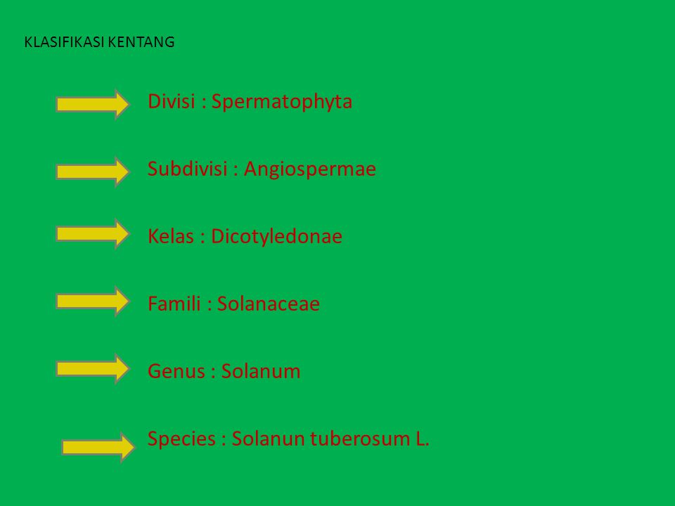 Divisi : Spermatophyta Subdivisi : Angiospermae Kelas : Dicotyledonae Famili : Solanaceae Genus : Solanum Species : Solanun tuberosum L. KLASIFIKASI K