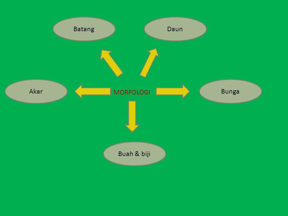 Cara Panen Waktu memanen sangat dianjurkan dilakukan pada waktu sore hari/pagi hari dan dilakukan pada saat hari cerah.