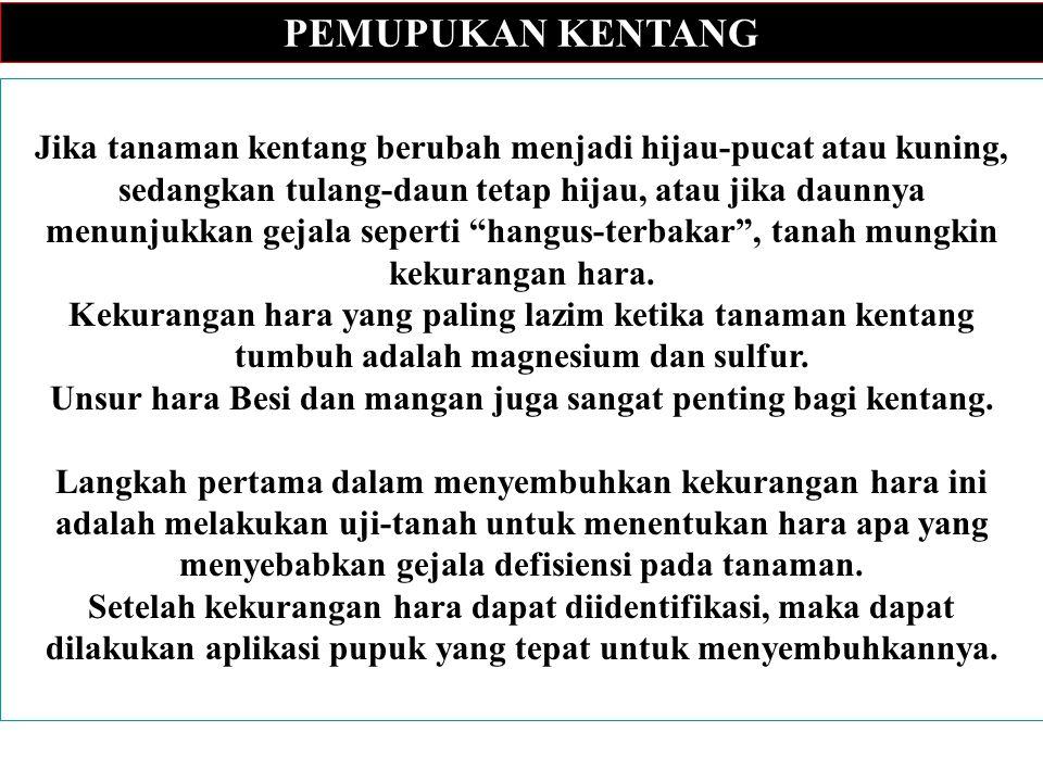 KAJIAN PASAR KENTANG Kerjasama Antara Canadian Cooperative Association dengan: Jurusan Teknologi Industri Pertanian (TIN), FTP IPB 1998/1999 PASAR KENTANG 1.Pengembangan pasar kentang di Jawa mempunyai peluang yang besar.