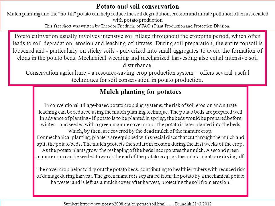 Potato and soil conservation Mulch planting and the