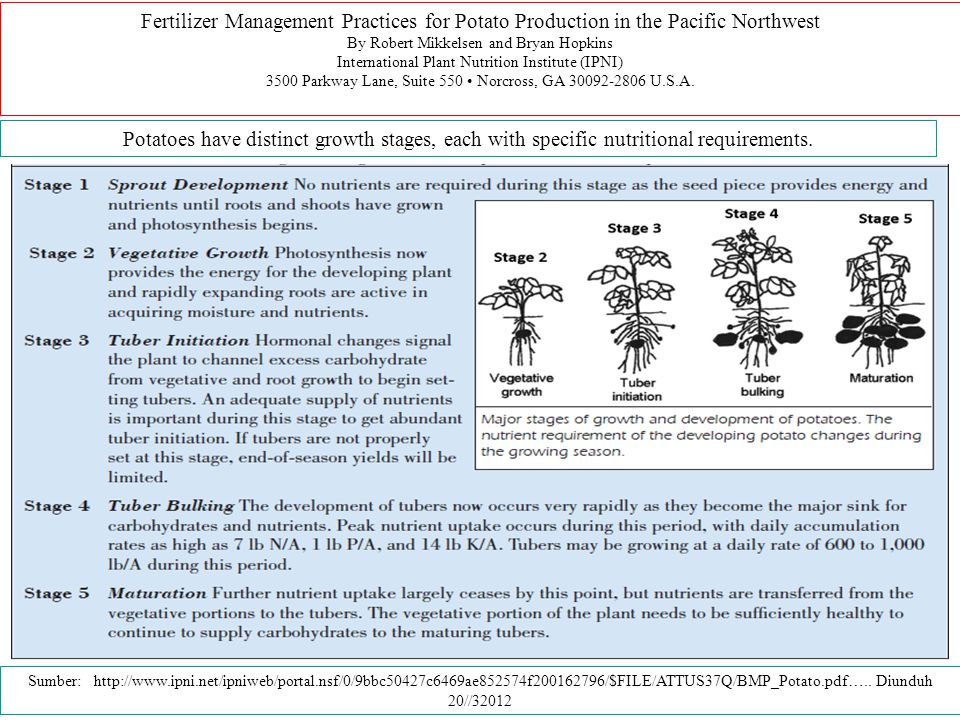 Fertilizer Management Practices for Potato Production in the Pacific Northwest By Robert Mikkelsen and Bryan Hopkins International Plant Nutrition Ins