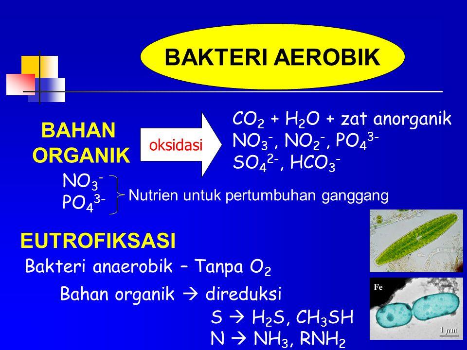 BAKTERI AEROBIK BAHAN ORGANIK CO 2 + H 2 O + zat anorganik NO 3 -, NO 2 -, PO 4 3- SO 4 2-, HCO 3 - oksidasi NO 3 - PO 4 3- Nutrien untuk pertumbuhan