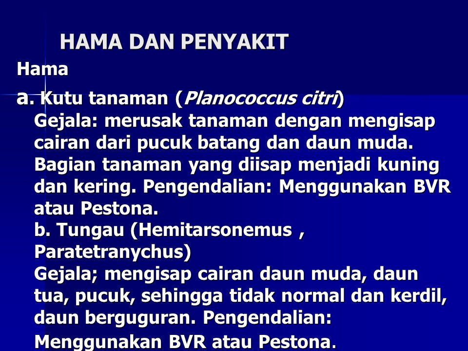 HAMA DAN PENYAKIT Hama a. Kutu tanaman (Planococcus citri) Gejala: merusak tanaman dengan mengisap cairan dari pucuk batang dan daun muda. Bagian tana