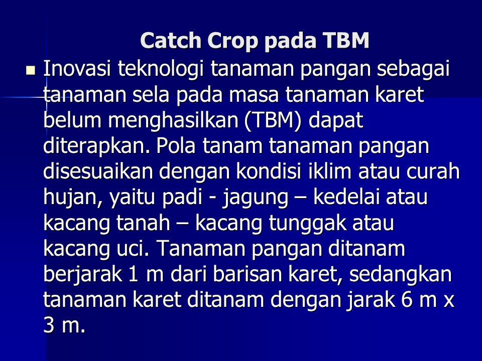 Catch Crop pada TBM Inovasi teknologi tanaman pangan sebagai tanaman sela pada masa tanaman karet belum menghasilkan (TBM) dapat diterapkan. Pola tana
