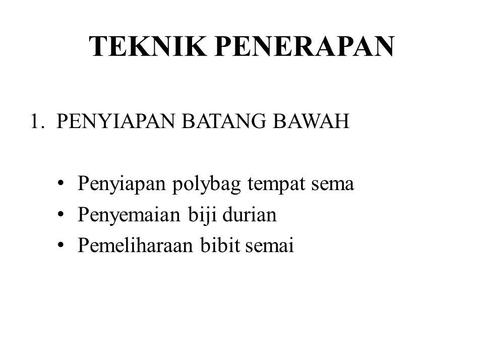 TEKNIK PENERAPAN 1.PENYIAPAN BATANG BAWAH Penyiapan polybag tempat sema Penyemaian biji durian Pemeliharaan bibit semai