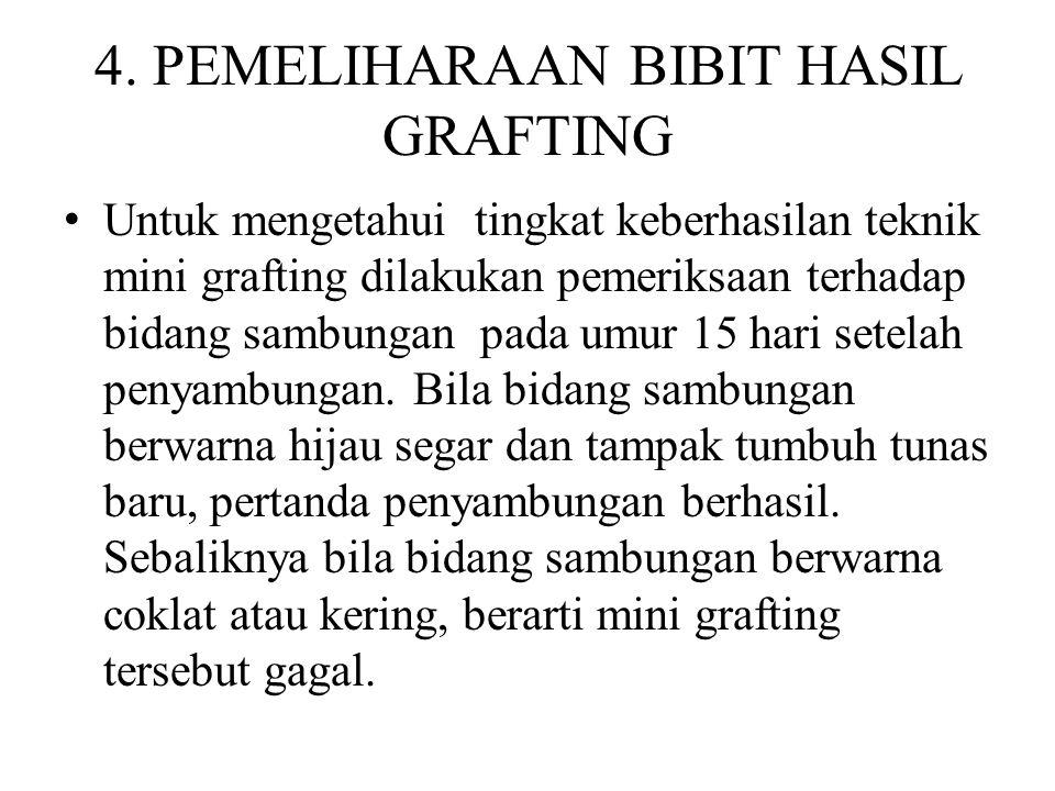 4. PEMELIHARAAN BIBIT HASIL GRAFTING Untuk mengetahui tingkat keberhasilan teknik mini grafting dilakukan pemeriksaan terhadap bidang sambungan pada u