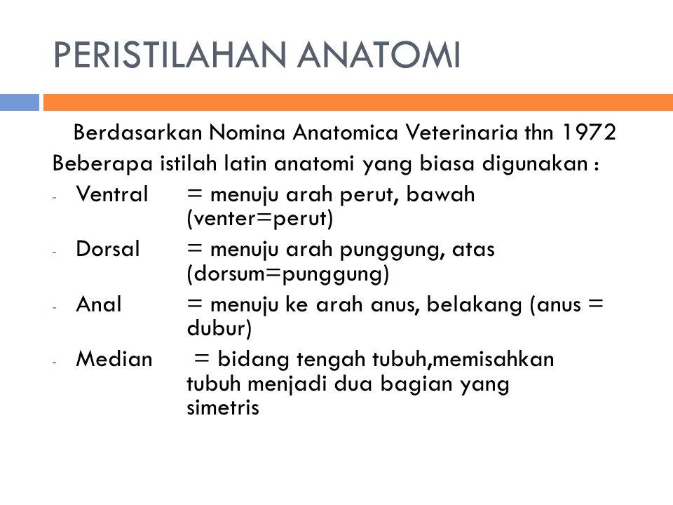 PERISTILAHAN ANATOMI Berdasarkan Nomina Anatomica Veterinaria thn 1972 Beberapa istilah latin anatomi yang biasa digunakan : - Ventral = menuju arah perut, bawah (venter=perut) - Dorsal = menuju arah punggung, atas (dorsum=punggung) - Anal= menuju ke arah anus, belakang (anus = dubur) - Median = bidang tengah tubuh,memisahkan tubuh menjadi dua bagian yang simetris