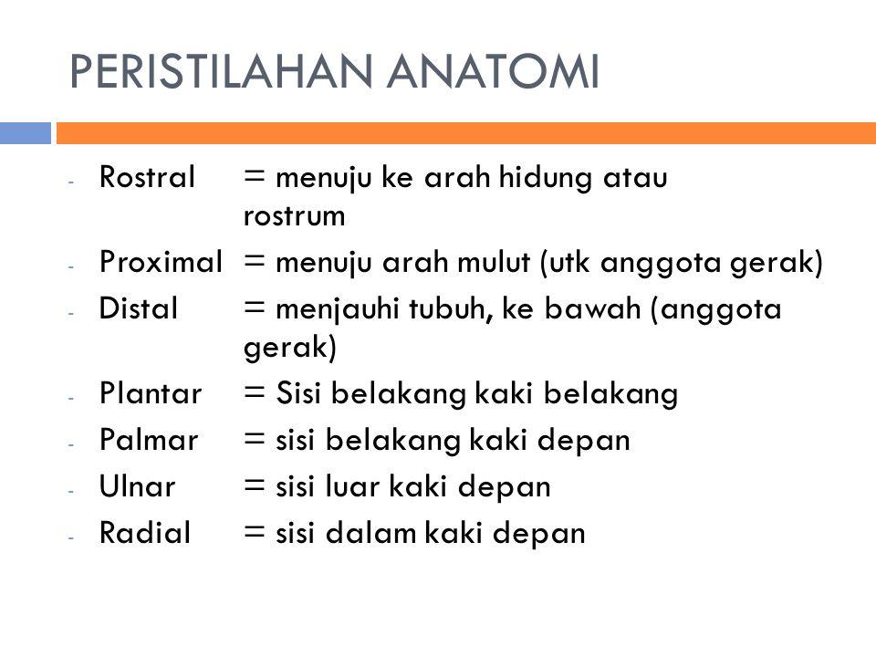 PERISTILAHAN ANATOMI - Rostral = menuju ke arah hidung atau rostrum - Proximal= menuju arah mulut (utk anggota gerak) - Distal= menjauhi tubuh, ke bawah (anggota gerak) - Plantar= Sisi belakang kaki belakang - Palmar= sisi belakang kaki depan - Ulnar = sisi luar kaki depan - Radial= sisi dalam kaki depan
