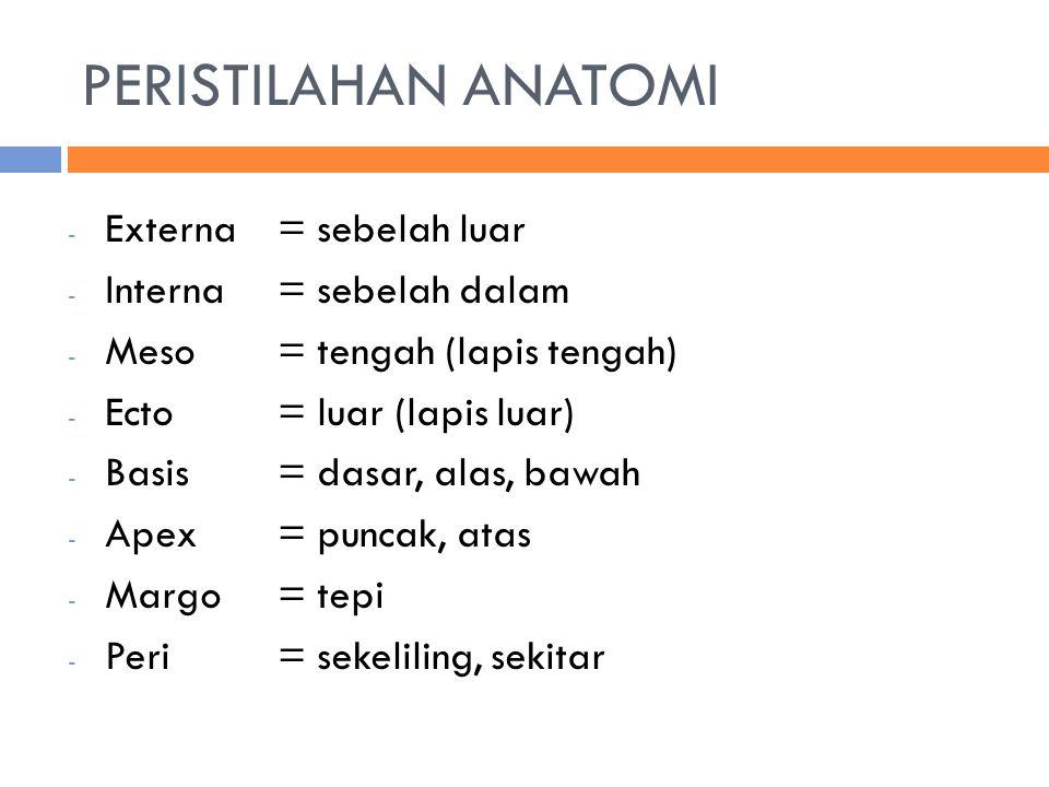 PERISTILAHAN ANATOMI - Externa= sebelah luar - Interna= sebelah dalam - Meso= tengah (lapis tengah) - Ecto= luar (lapis luar) - Basis= dasar, alas, ba