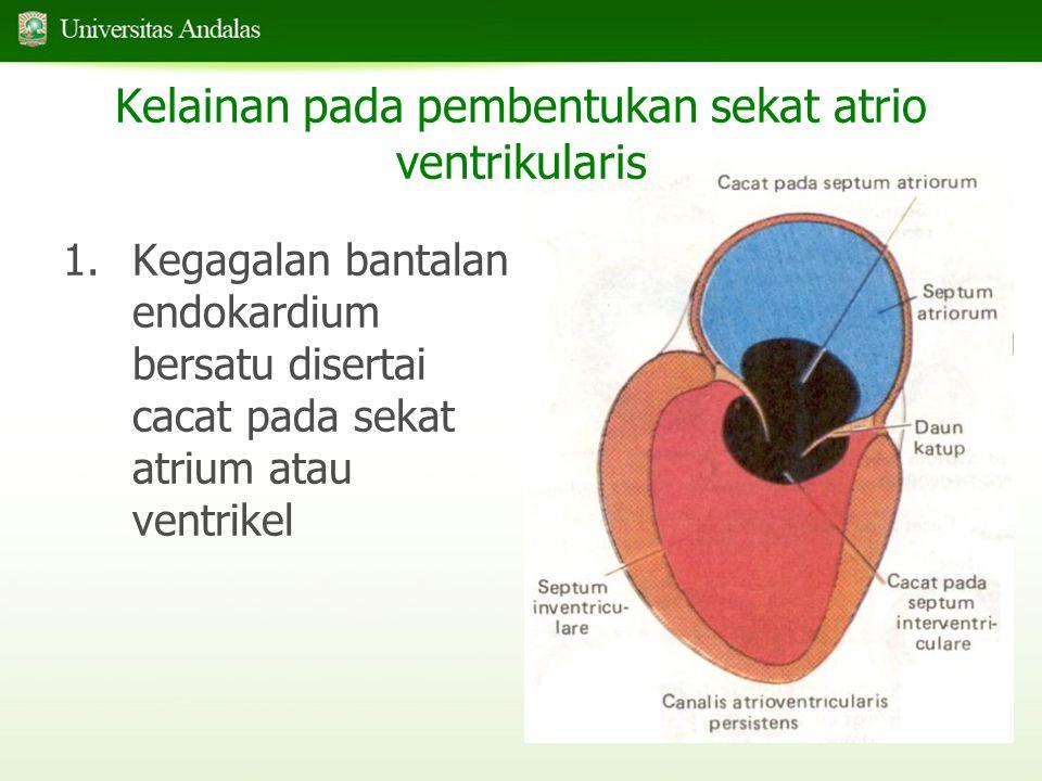 26/9 1.Kegagalan bantalan endokardium bersatu disertai cacat pada sekat atrium atau ventrikel Kelainan pada pembentukan sekat atrio ventrikularis