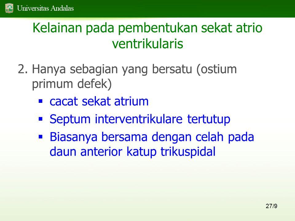 27/9 Kelainan pada pembentukan sekat atrio ventrikularis 2.Hanya sebagian yang bersatu (ostium primum defek)  cacat sekat atrium  Septum interventri