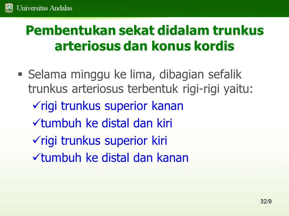 32/9  Selama minggu ke lima, dibagian sefalik trunkus arteriosus terbentuk rigi-rigi yaitu: rigi trunkus superior kanan tumbuh ke distal dan kiri rig