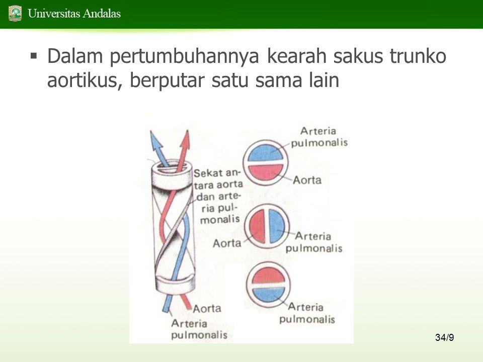 34/9  Dalam pertumbuhannya kearah sakus trunko aortikus, berputar satu sama lain