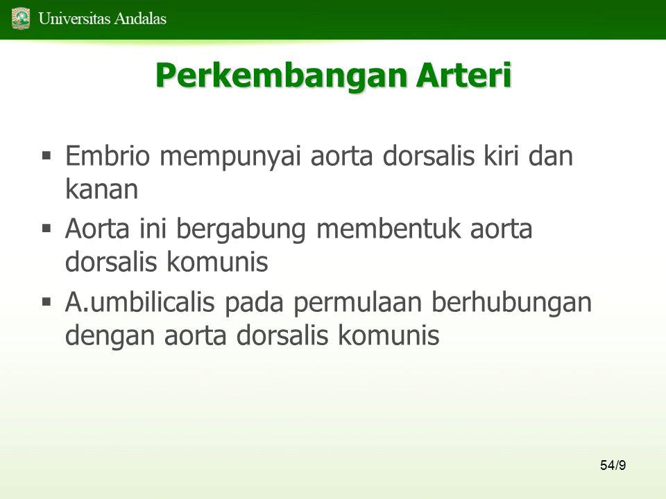 54/9 Perkembangan Arteri  Embrio mempunyai aorta dorsalis kiri dan kanan  Aorta ini bergabung membentuk aorta dorsalis komunis  A.umbilicalis pada