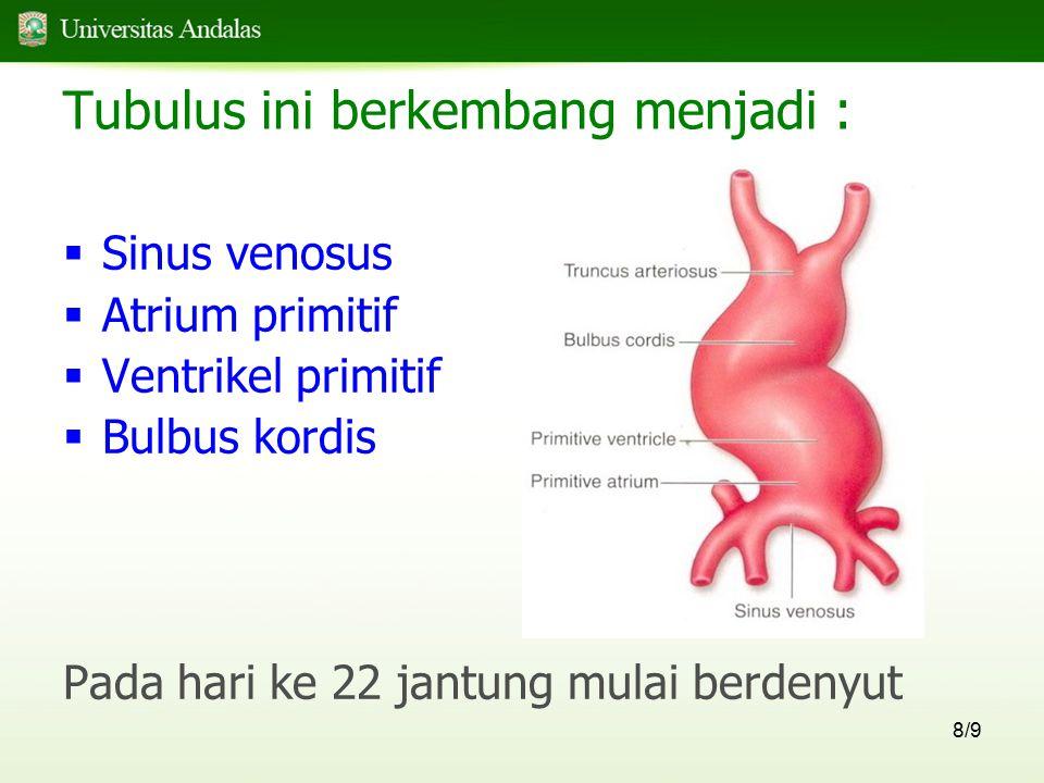 59/9  Lengkung aorta 1-2 mengalami regresi dan sebagian kecil menetap untuk membentuk A.maxillaris  Lengkung aorta 3, 4, 6 berkembang menjadi arteri pada orang dewasa  Lengkung aorta 5 tidak pernah terbentuk pada manusia