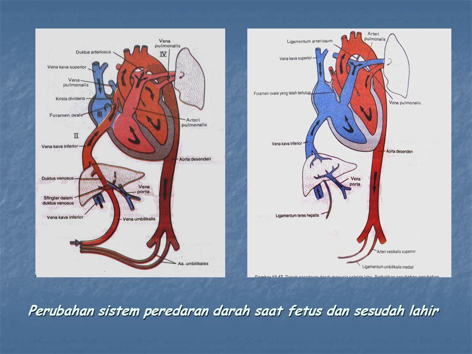 Perubahan sistem peredaran darah saat fetus dan sesudah lahir