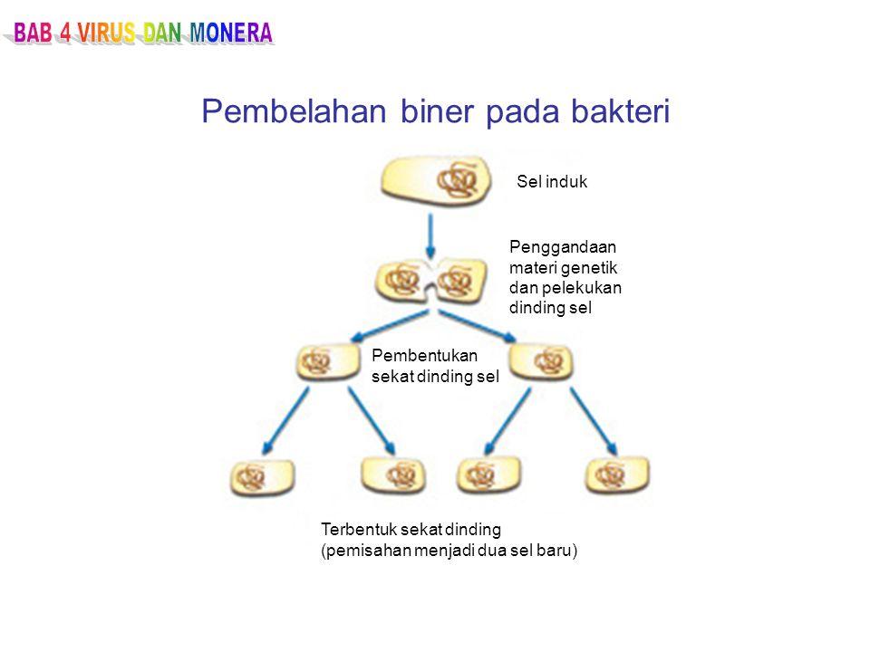 Rekombinasi genetik pada bakteri TransformasiTransduksiKonjugasi Sel bakteri DNA bebas Kromosom DNA diambil oleh sel Rekombinasi DNA ke dalam kromosom Sel rekombinan Bakteriofage Infeksi fage Pelepasan fage Reinfeksi bakteri baru Sel rekombinan Sel bakteri pertama Plasmid Sel bakteri kedua Kontak antara dua sel;kopi plasmid dipindahkan Dua sel yang Mengandung plasmid