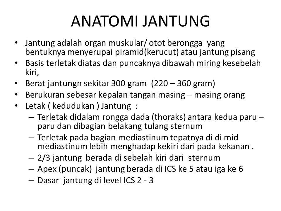 ANATOMI JANTUNG Jantung adalah organ muskular/ otot berongga yang bentuknya menyerupai piramid(kerucut) atau jantung pisang Basis terletak diatas dan