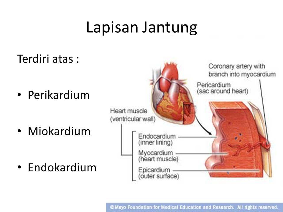 Lapisan Jantung Terdiri atas : Perikardium Miokardium Endokardium