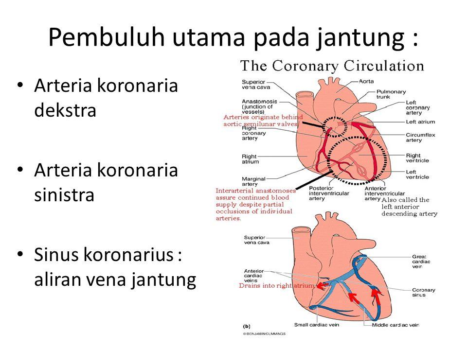 Pembuluh utama pada jantung : Arteria koronaria dekstra Arteria koronaria sinistra Sinus koronarius : aliran vena jantung