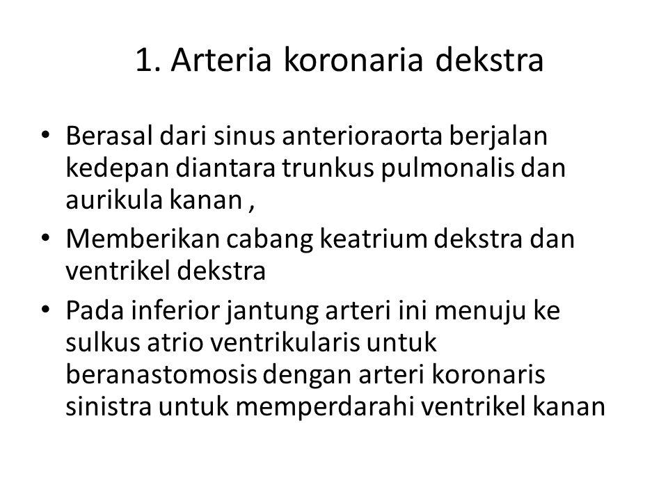 1. Arteria koronaria dekstra Berasal dari sinus anterioraorta berjalan kedepan diantara trunkus pulmonalis dan aurikula kanan, Memberikan cabang keatr