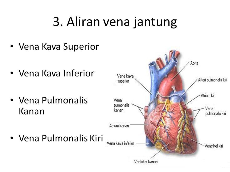 3. Aliran vena jantung Vena Kava Superior Vena Kava Inferior Vena Pulmonalis Kanan Vena Pulmonalis Kiri
