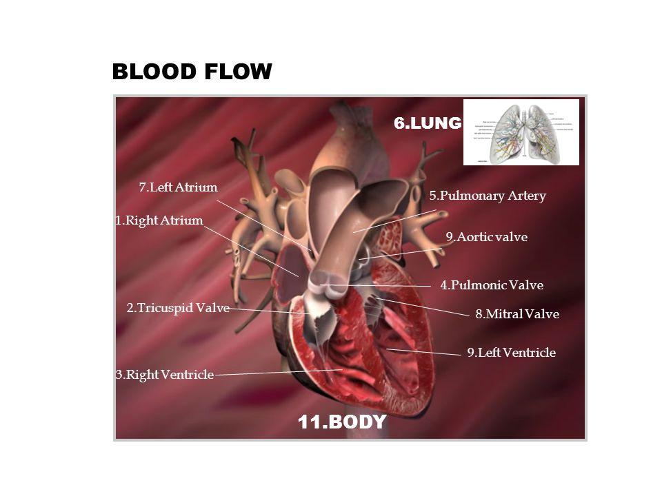 4.Pulmonic Valve 9.Aortic valve 5.Pulmonary Artery 2.Tricuspid Valve 8.Mitral Valve BLOOD FLOW 1.Right Atrium 7.Left Atrium 3.Right Ventricle 9.Left V