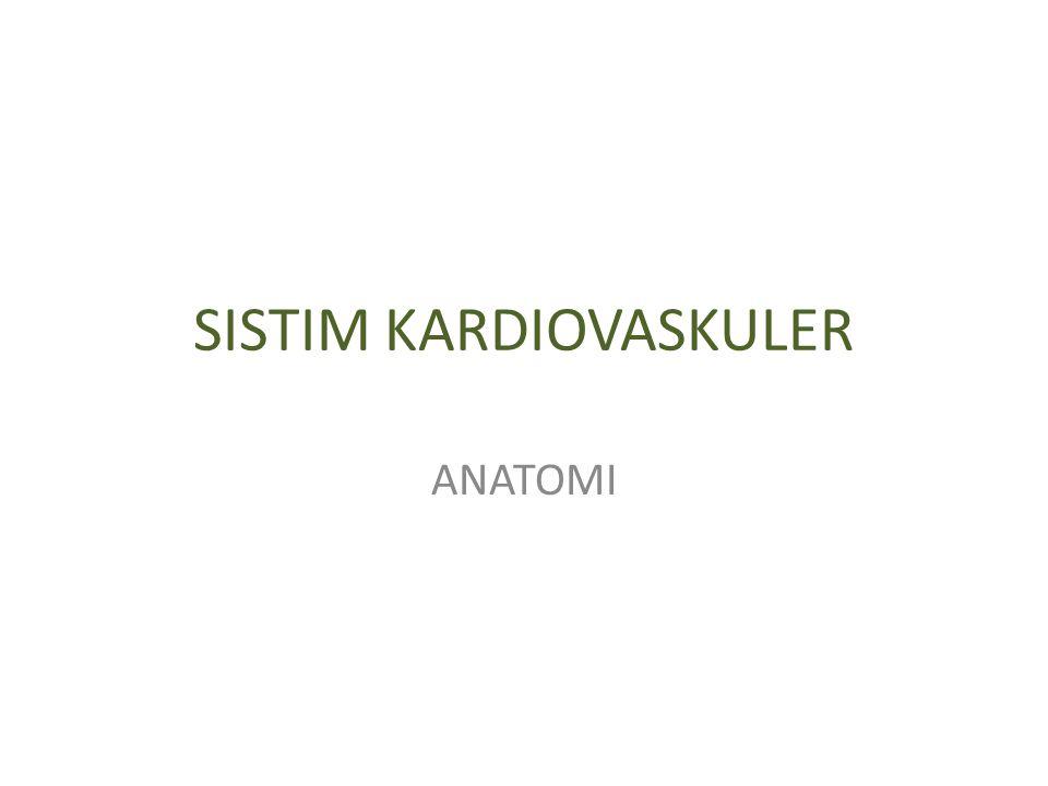 SISTIM KARDIOVASKULER ANATOMI