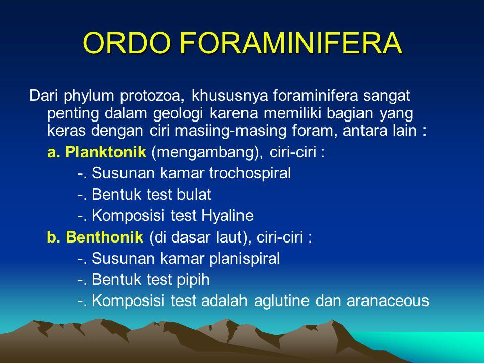 ORDO FORAMINIFERA Dari phylum protozoa, khususnya foraminifera sangat penting dalam geologi karena memiliki bagian yang keras dengan ciri masiing-masi