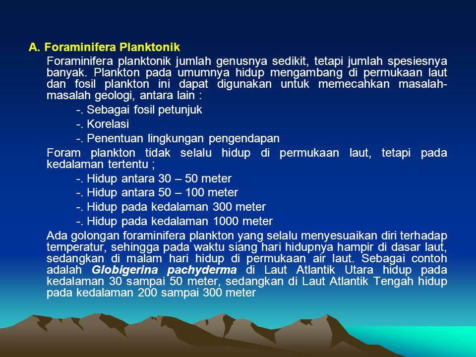 A. Foraminifera Planktonik Foraminifera planktonik jumlah genusnya sedikit, tetapi jumlah spesiesnya banyak. Plankton pada umumnya hidup mengambang di