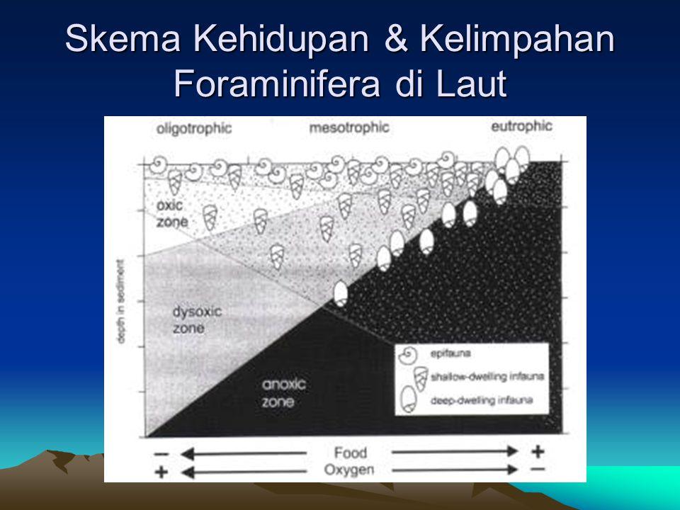 MORFOLOGI FORAMINIFERA Bentuk luar foraminifera, jika diamati dibawah mikroskop dapat menunjukkan beberapa kenampakan yang bermacam-macam dari cangkang foraminifera, meliputi : -.