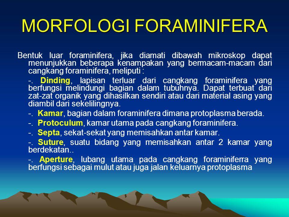 MORFOLOGI FORAMINIFERA Bentuk luar foraminifera, jika diamati dibawah mikroskop dapat menunjukkan beberapa kenampakan yang bermacam-macam dari cangkan