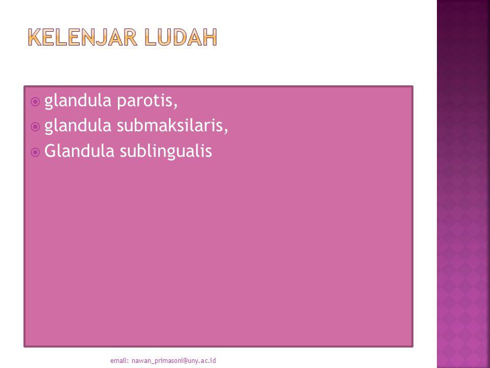  glandula parotis,  glandula submaksilaris,  Glandula sublingualis email: nawan_primasoni@uny.ac.id