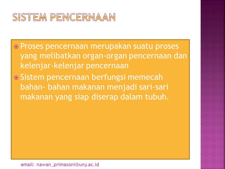  Proses pencernaan merupakan suatu proses yang melibatkan organ-organ pencernaan dan kelenjar-kelenjar pencernaan  Sistem pencernaan berfungsi memec