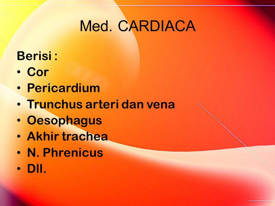 Med. CARDIACA Berisi : Cor Pericardium Trunchus arteri dan vena Oesophagus Akhir trachea N. Phrenicus Dll.