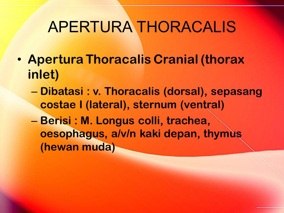 APERTURA THORACALIS Apertura Thoracalis Cranial (thorax inlet) – Dibatasi : v. Thoracalis (dorsal), sepasang costae I (lateral), sternum (ventral) – B