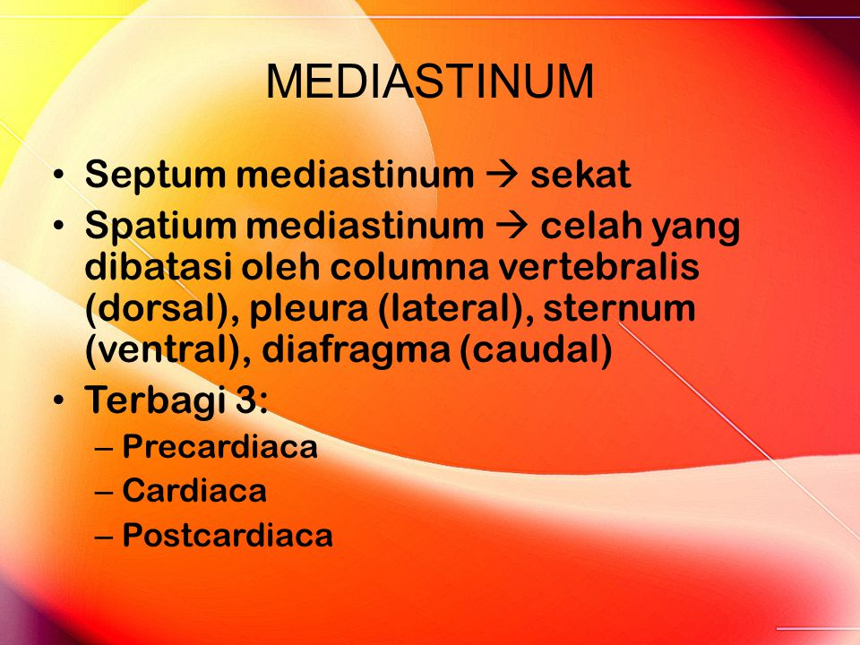 MEDIASTINUM Septum mediastinum  sekat Spatium mediastinum  celah yang dibatasi oleh columna vertebralis (dorsal), pleura (lateral), sternum (ventral), diafragma (caudal) Terbagi 3: – Precardiaca – Cardiaca – Postcardiaca