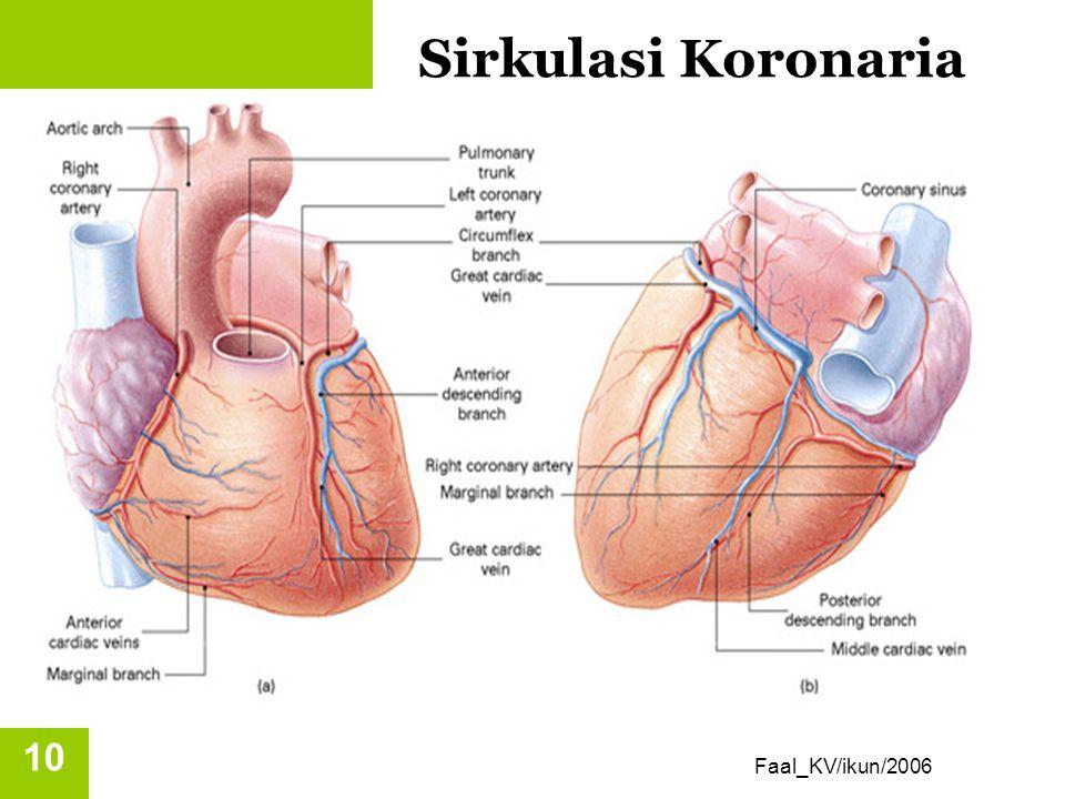 Suplai darah ke jantung Diperdarahi oleh arteri koronaria kanan dan kiri, yang bercabang di aorta. Arteri koronaria menerima sekitar 5 % darah yang di
