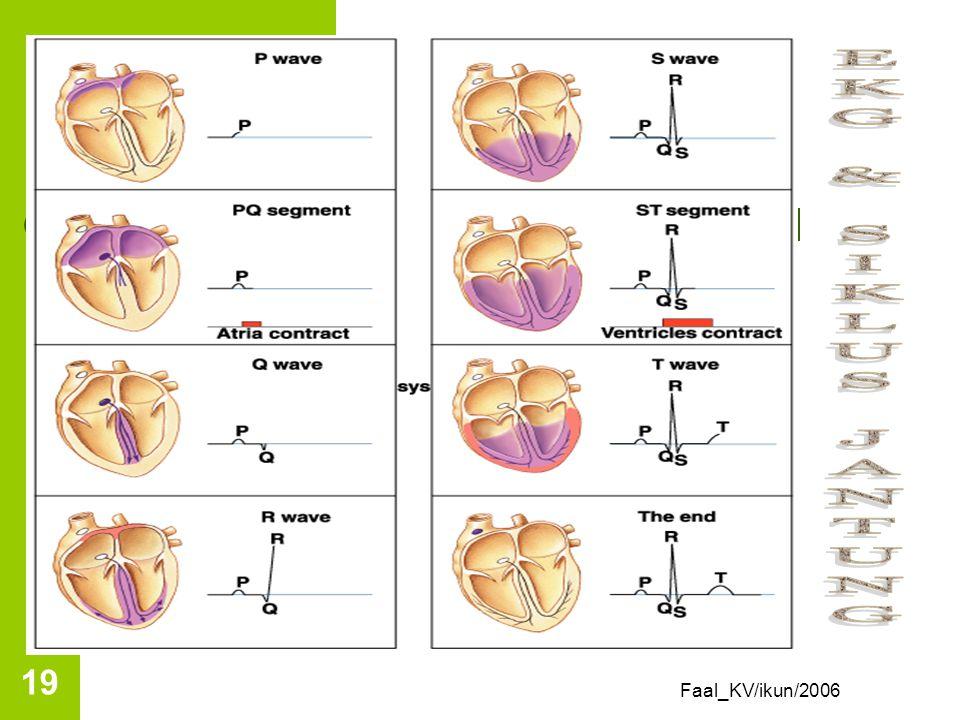 Faal_KV/ikun/2006 18 Interpretasi EKG Gelombang P: depolarisasi atrium Gelombang Q: depolarisasi di berkas his Gelombang R: depolarisasi menyebar dr b