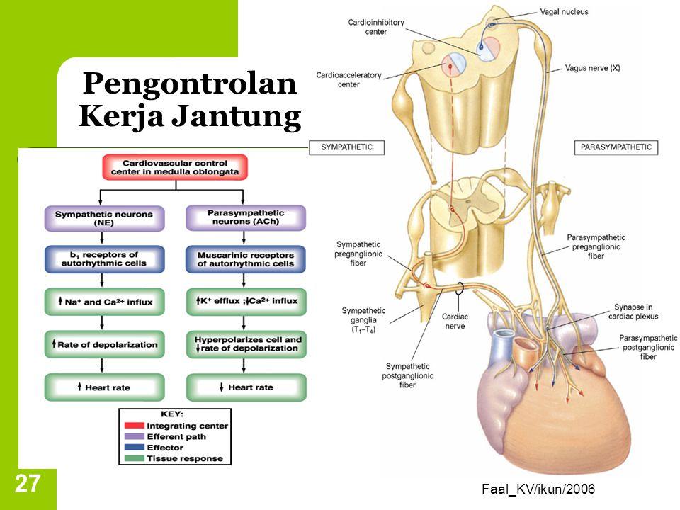 Reflek baroreseptor Reflek baroreseptor berbanding terbalik dengan frekuensi jantung. Peningkatan tekanan darah di arteri menstimulasi baroreseptor me