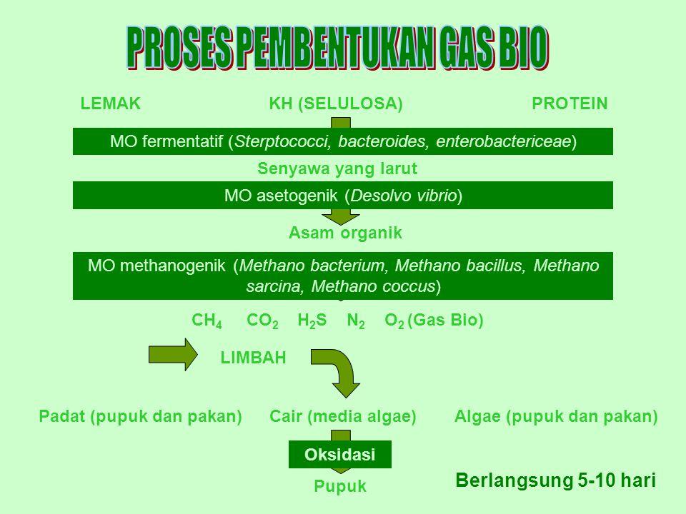 LEMAKPROTEINKH (SELULOSA) Senyawa yang larut MO fermentatif (Sterptococci, bacteroides, enterobactericeae) Asam organik CH 4 CO 2 H 2 S N 2 O 2 (Gas Bio) LIMBAH Padat (pupuk dan pakan)Cair (media algae)Algae (pupuk dan pakan) Pupuk MO asetogenik (Desolvo vibrio) MO methanogenik (Methano bacterium, Methano bacillus, Methano sarcina, Methano coccus) Oksidasi Berlangsung 5-10 hari