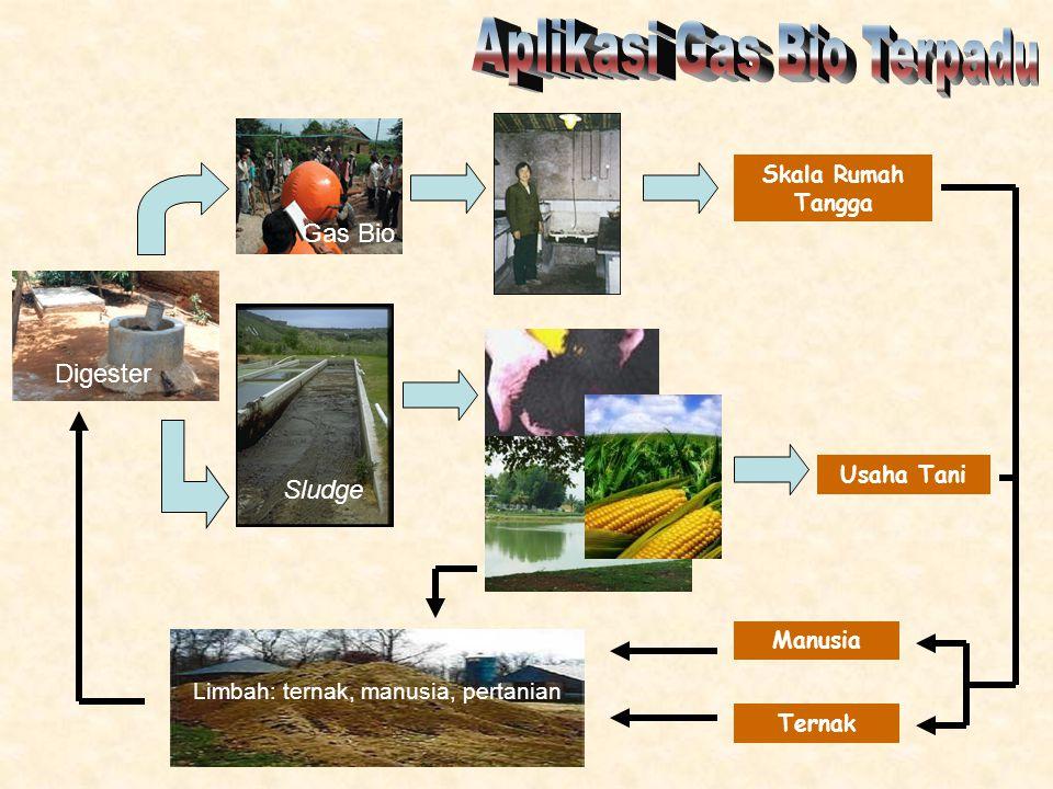 Limbah: ternak, manusia, pertanian Digester Gas Bio Sludge Skala Rumah Tangga Usaha Tani Manusia Ternak