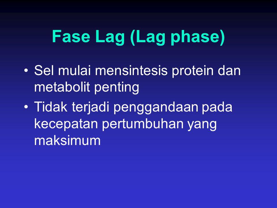 Fase Lag (Lag phase) Sel mulai mensintesis protein dan metabolit penting Tidak terjadi penggandaan pada kecepatan pertumbuhan yang maksimum