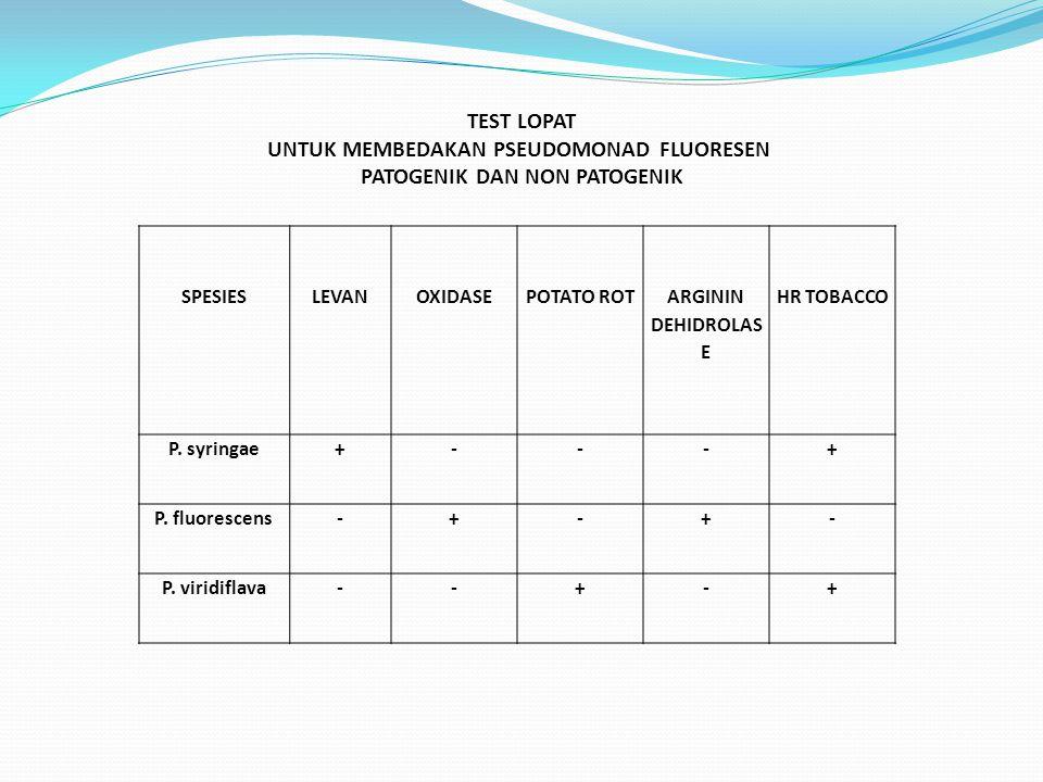 SPESIESLEVANOXIDASEPOTATO ROT ARGININ DEHIDROLAS E HR TOBACCO P. syringae+---+ P. fluorescens-+-+- P. viridiflava--+-+ TEST LOPAT UNTUK MEMBEDAKAN PSE