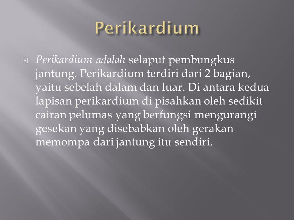  Perikardium adalah selaput pembungkus jantung.