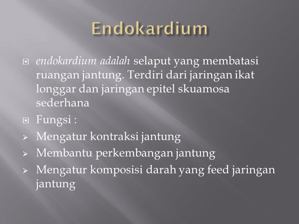 endokardium adalah selaput yang membatasi ruangan jantung.
