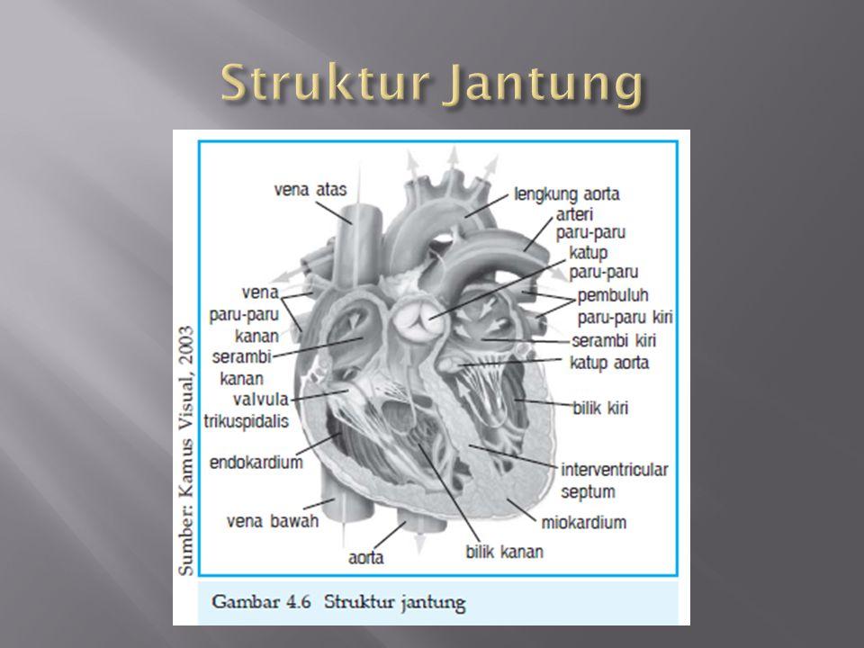 Dinding jantung terdiri atas 3 lapisan, lapisan tersebut adalah :  Perikardium  Miokardium  Endokardium
