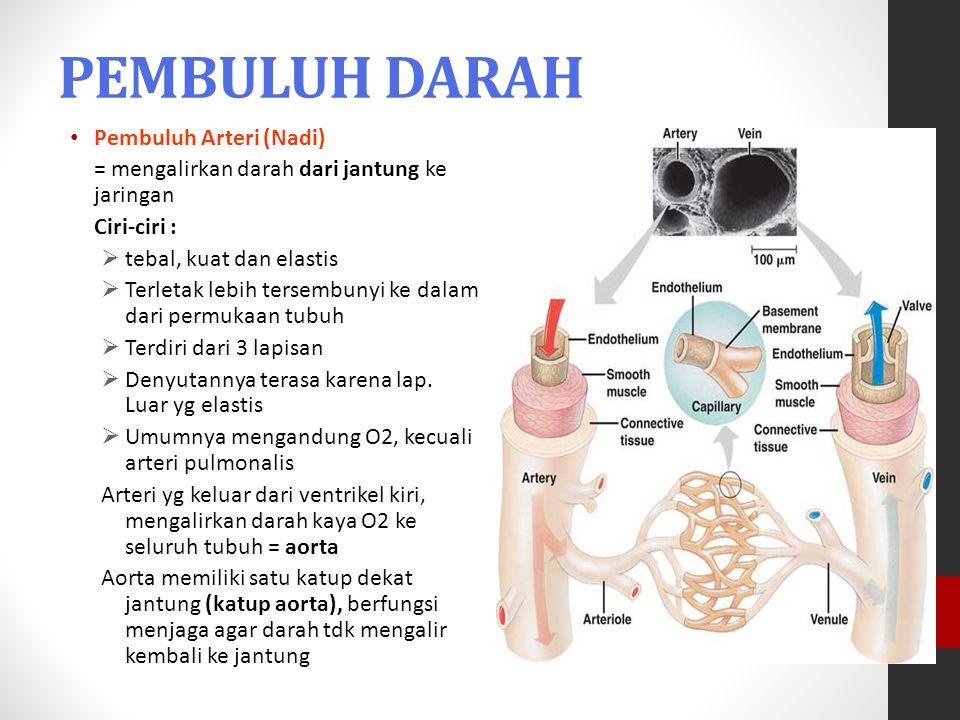 PEMBULUH DARAH Pembuluh Arteri (Nadi) = mengalirkan darah dari jantung ke jaringan Ciri-ciri :  tebal, kuat dan elastis  Terletak lebih tersembunyi