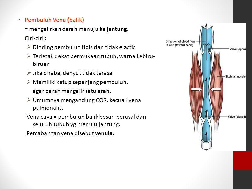 Pembuluh Vena (balik) = mengalirkan darah menuju ke jantung. Ciri-ciri :  Dinding pembuluh tipis dan tidak elastis  Terletak dekat permukaan tubuh,